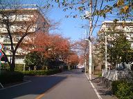 20051122_AkiStreet1