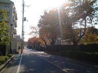 20051122_AkiStreet2