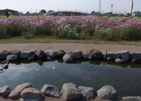 20101024_kosumosu3