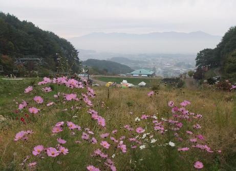 20101030_kosumosu