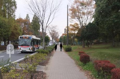 20101118_road3
