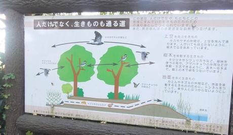 20101204_setsumei