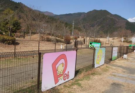 20101220_dog_run