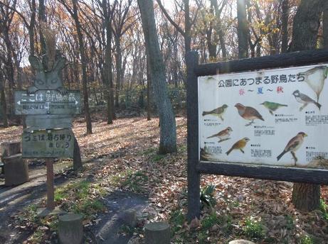 20101227_yachonomori