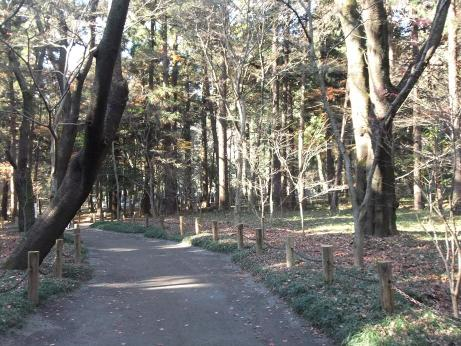 20101227_zoukibayashi