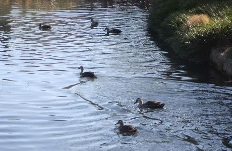 20110115_water_bird