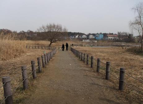 20110123_morinjinuma