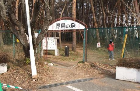 20110123_yachounomori