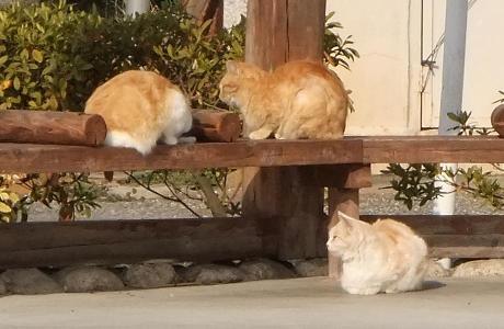 20110123_cat2