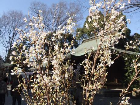 20110131_hikawa_jinjya_sanpai2