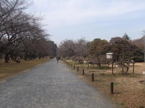 20110217_road