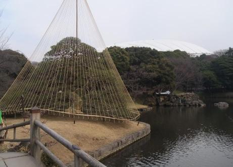 20110219_koishigawa_teien