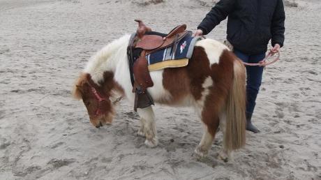 20110221_pony