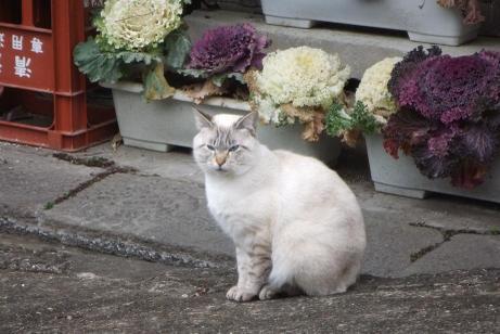 20110304_cat