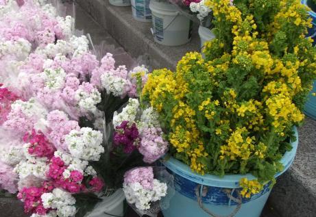 20110306_flower