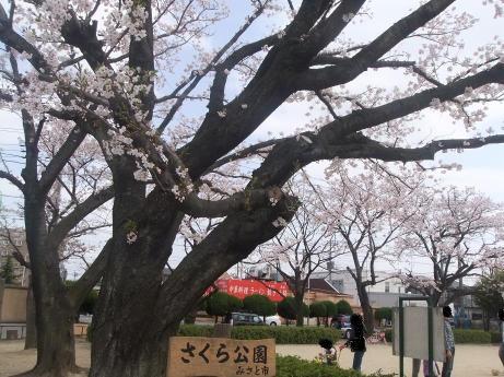 20110414_sakura_park