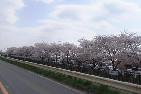 20110417_nigouhan_yousuiro