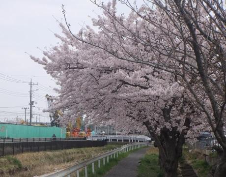 20110417_nigouhanryou_yousuiro2