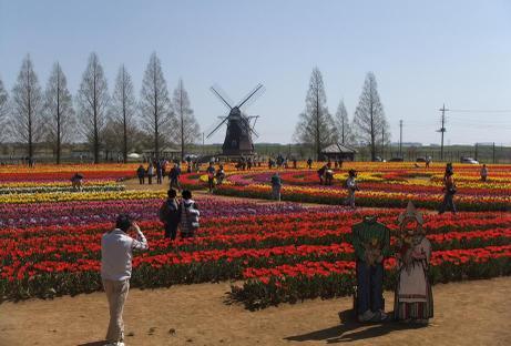 20110420_tulip3