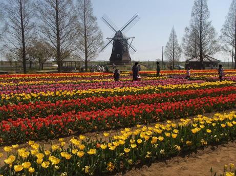 20110420_tulip6