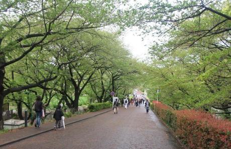 20110424_kounai3