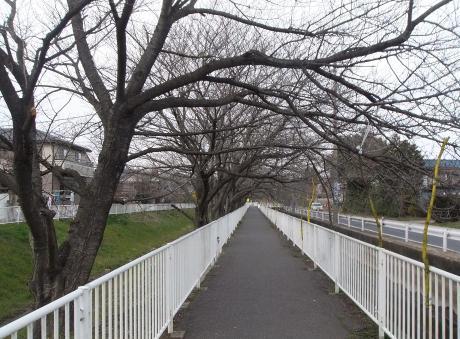 20110520_sakura_road