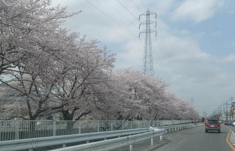 20110521_sakura_dori