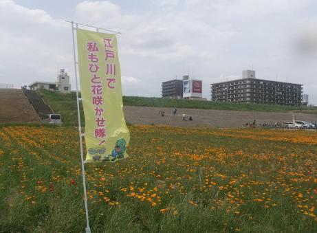 20110523_flower