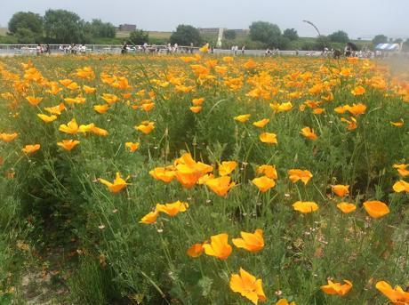 20110523_flower3