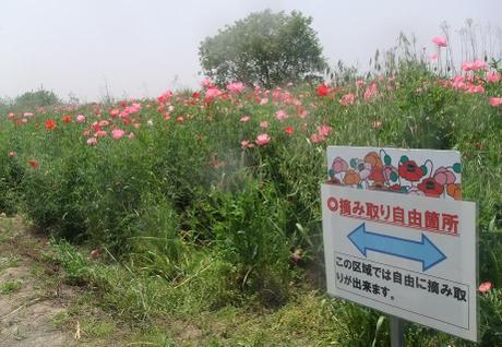 20110525_tsumitori_free