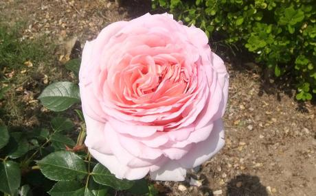 20110527_flower3