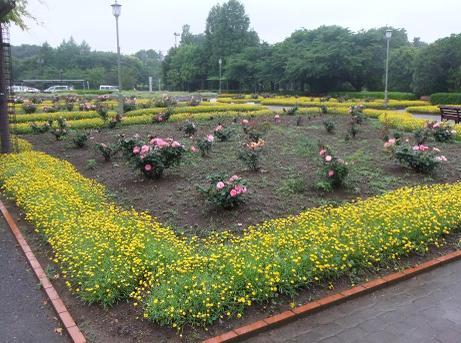 20110605_bara_garden