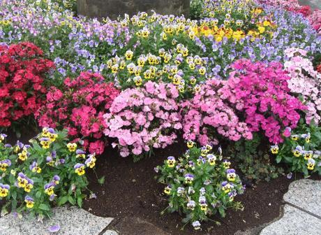 20110605_flower