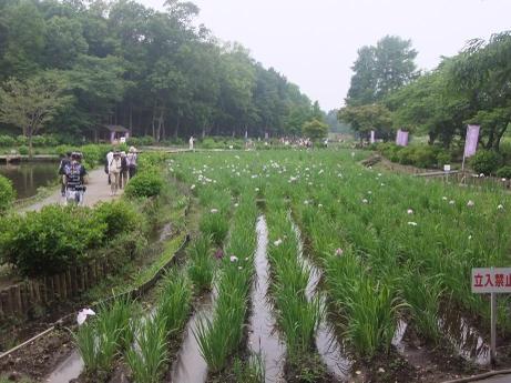 20110610_syoubu2