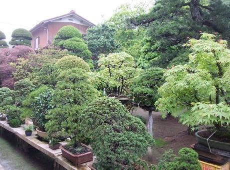 20110612_bonsai