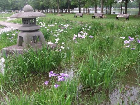 20110617_syoubu2