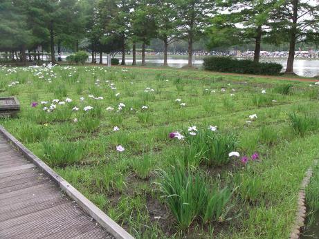 20110617_syoubu3