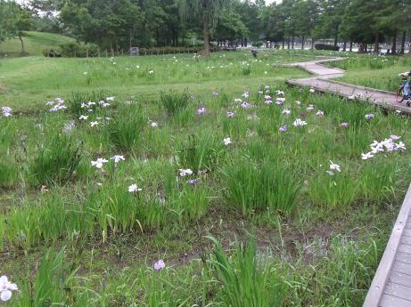 20110617_syoubu4