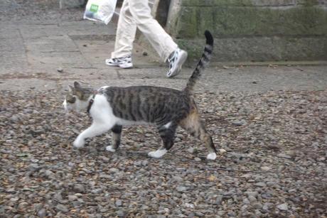 20110618_cat
