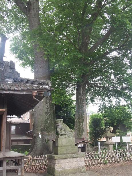 20110618_keyaki1