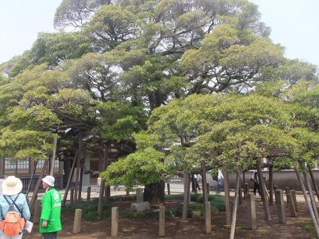 20110618_mokukoku