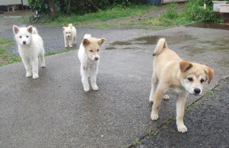 20110627_dog1
