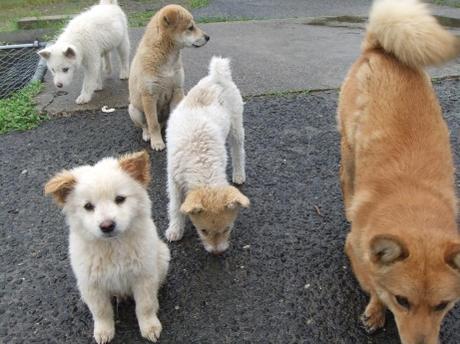 20110627_dog2