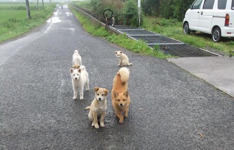 20110627_dog3