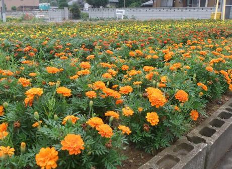 20110715_flower