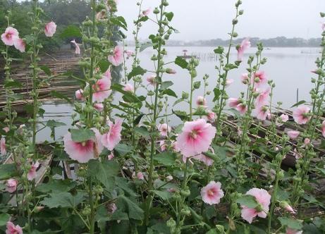 20110715_flower2