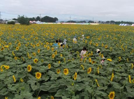 20110725_daimeiro7
