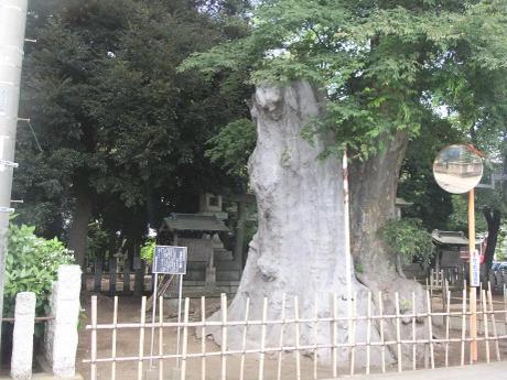 20110810_ookeyaki