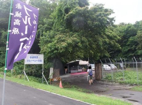 20110815_blueberry_mori1