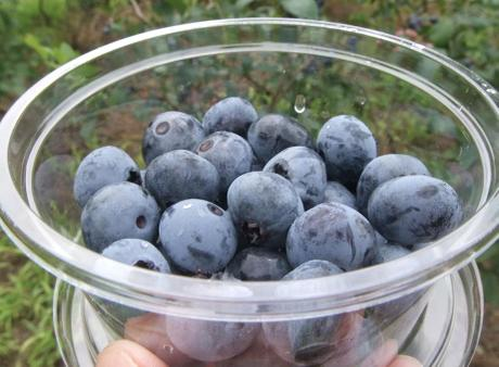 20110815_blueberry_mori4